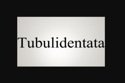 Aardvark performs Cantata Tubulidentata
